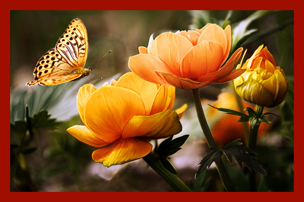 Butterfly and flowers with frames
