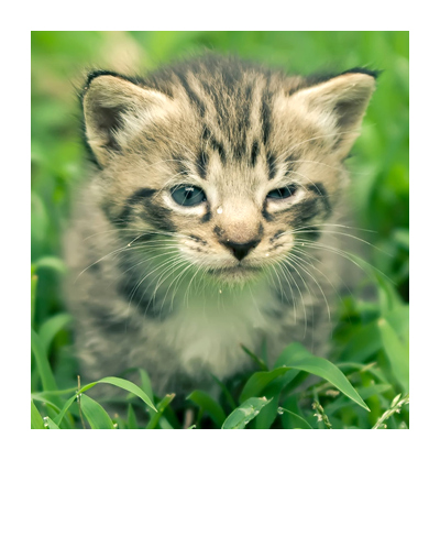 Kitty in the grass with frame